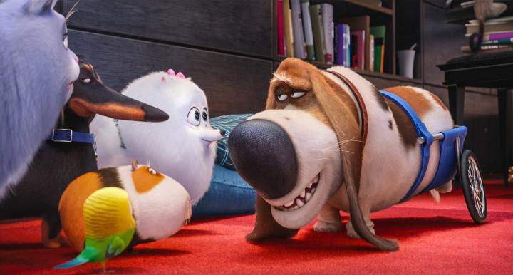 Dana Carvey, Tara Strong, Chris Renaud, Lake Bell, Jenny Slate, and Hannibal Buress in The Secret Life of Pets (2016)