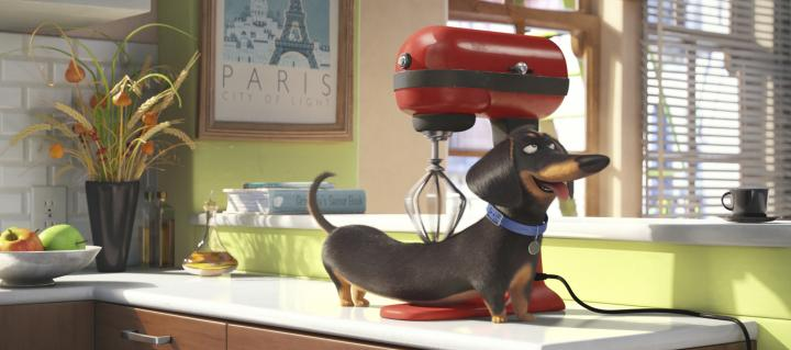 Hannibal Buress in The Secret Life of Pets (2016)