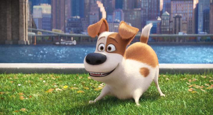 Louis C.K. in The Secret Life of Pets (2016)