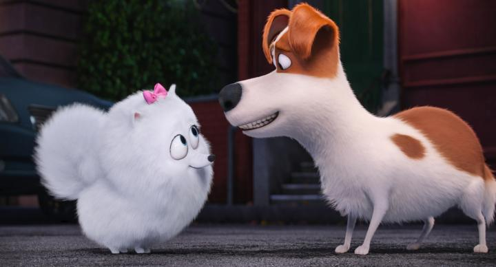 Louis C.K. and Jenny Slate in The Secret Life of Pets (2016)